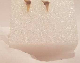 Sku C1 - Shark Teeth Earrings