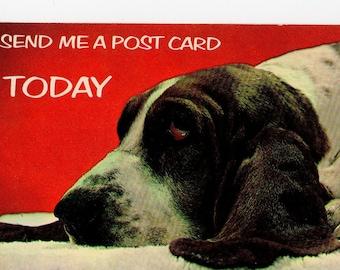 Vintage Basset Hound Postcard | Send Me a Post Card Today | Photograph Card Dogs Puppies Pups Pets Dog | Paper Ephemera