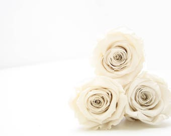 Preserved Ivory Roses that last a year Box of 6 rose heads.