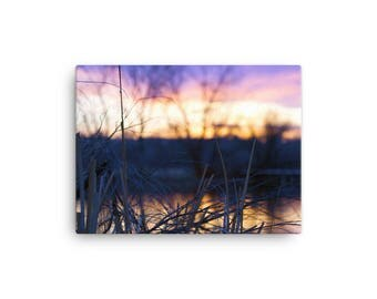 Reeds (on canvas)