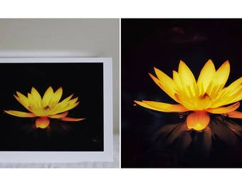 Glowing Yellow Water Lily greeting card
