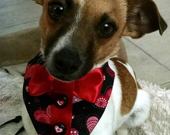 Dog  or Cat Valentine Collar Decorative red heart collar for IG or Twitter photo props