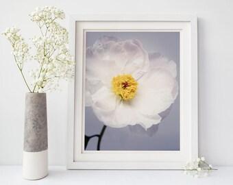 home decor photography. White Flower Art Print  Peony Bedroom Wall Photography Office Fine art photo Etsy
