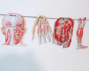 Anatomy Images Paper Banner, Medical Wall Banner, Body Parts Garland, Party Garland, Anatomy Images, Students Wall Banner, Medical Cards