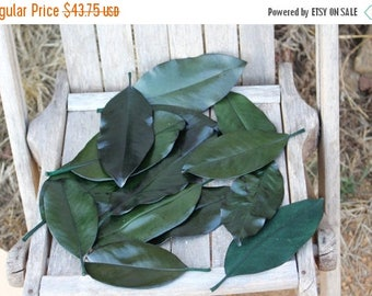 Save25% 125 Magnolia leaves preserved green - Gift wrapping-Party Favors-Wedding invitations