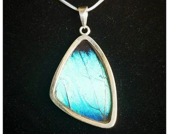 Real Butterfly Wing Jewelry Sterling Silver Pendant Necklace Morpho Deidamia XL WING XxFREE CHAINxX