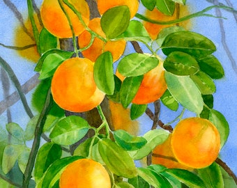 Original Watercolor Oranges on a Branch Painting, Citrus Fruit Illustration 10.5 x 15 inches