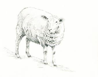 Original Hand Drawn Animal Sketches 8 x 10