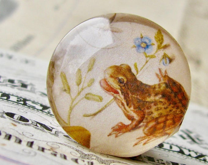 Frog illustration, science drawing, handmade 25mm round glass cabochon, bottle cap, 1 inch, from our Vintage Botanicals collection