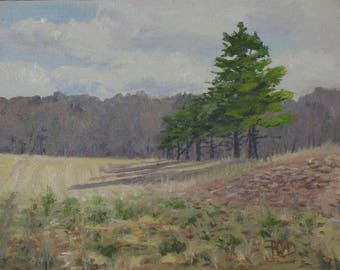 Original oil, landscape painting, pine trees and fields, 8x10