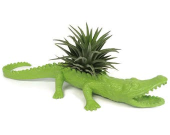 Upcycled alligator with air plant. Great boyfriend gift.