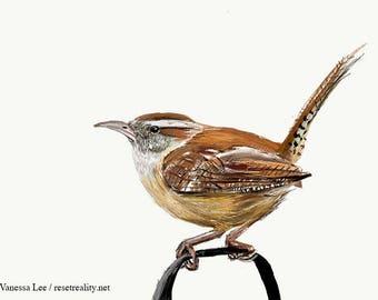 Carolina Wren Print, Wildlife Illustration, Cute Bird Drawing, Nursery Art  WREN1
