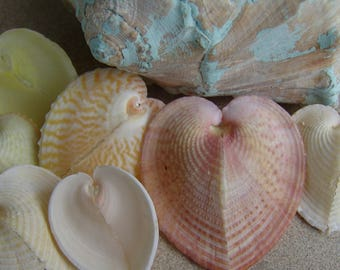 Natural Color Pastel Heart Sea Shells LOVERS Seashells Beach Wedding Accents Shape Cockle Shell Arts Crafts Valentines Day Corculum cardissa