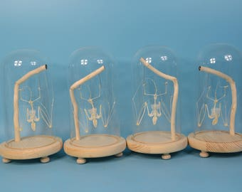 wholesale 4 set of bat skeleton mounted in glass dome free shipping