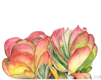 Flapjacks print of watercolor painting, FJ22417, A4 size, Flapjacks watercolor painting print, Succulent print, succulent watercolor