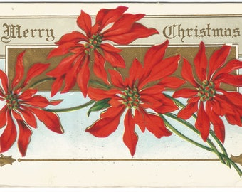 Bright Ruby Red Poinsettia Bouquet Gold Gild Background Merry Christmas Vintage Postcard Holiday Greeting Card
