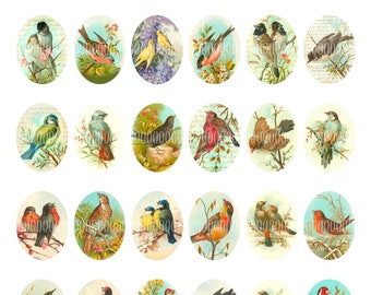 Printable Oval Cabochons, Vintage Images for pendants 30mm by 40mm birds, songbirds, robins, larks--8.5 by 11--Digital Collage Sheet 4037