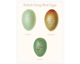 British Song Bird Eggs Print, Nature Study Print Pastel Colors Speckled Bird Eggs, Natural History Gift For Her, Budget Gift for Friend