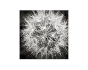 Starburst Photograph, Dandelion, Black White Photography, Seed Head, Nature Photography