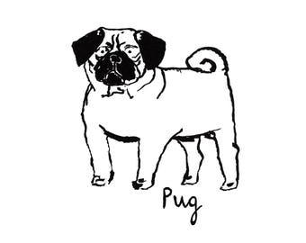 Pug Standing