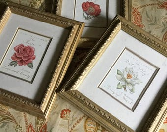 """Set of Three 8 1/4"""" x 7 1/4"""" Wood Framed Matted Pictures-Rose/Poppy and Water Lily"""