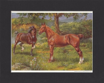 Hackney Horse Print 1923 By Edward Miner Print of Signed Painting Mounted with Mat - Hackney Print Hackney Pony Hackney Art Hackney Painting