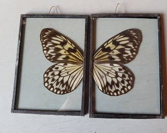 Gorgeous 2 piece taxidermy butterfly wing hanging