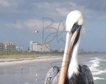 Pelican with Attitude