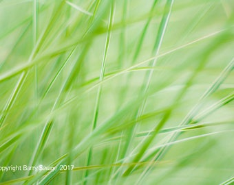 Blades of Grass Abstract - mint green, pale green 4x6, 5x7, 8x10 and 11x14