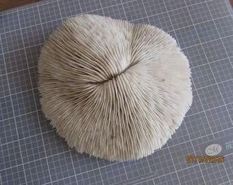 Coral, Tank Coral, Nautical, Real Coral, Beach wedding Coral,  Coral, Coral