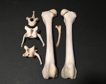 """Bone Lot 06 - """"Deformed"""" Bones"""