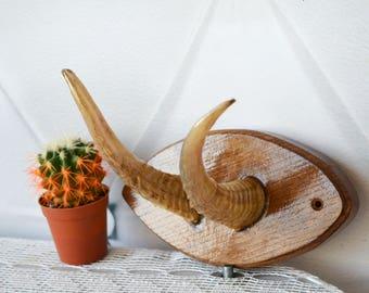 Goat's horns, Wooden Plaque, mounted antlers, Nature Rustic Decor, hanging hooks, antlers hooks, Vintage Horns, Taxidermy Deer