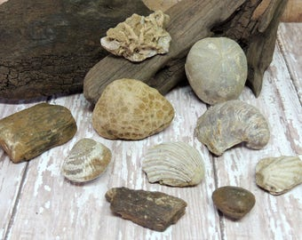 10 Cretaceous Era Fossils, Coral, Texana, Gryphea, Urchin, Bone, Lopha, and More Natural History, Geology, Educational Fossil collection