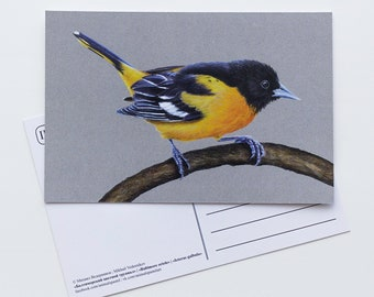 Postcard Baltimore Oriole - Bird - Stationery