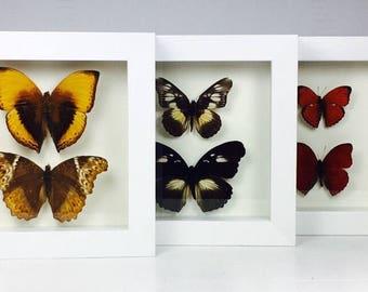 Six Framed Butterflies Three Wooden Frames Entomology Insect Art