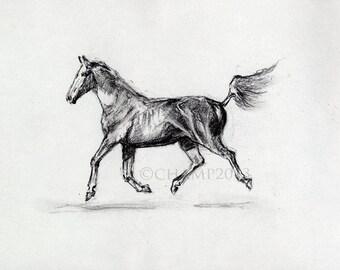 Study of animal free - horse too