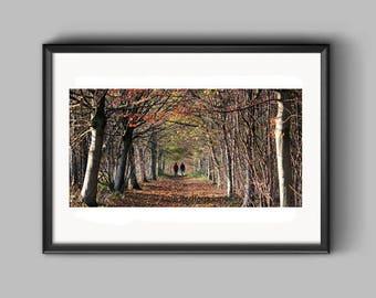 Big Wood, Erddig, an Erddig Countrypark Landscape Photograph.