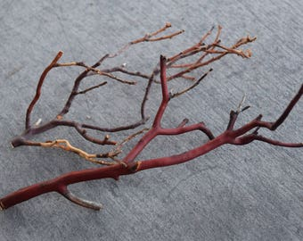Manzanita Twigs - Pack of 2