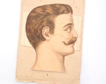 Antique anatomy print, anatomy, antique anatomy, human anatomy, vintage anatomy, human body, lithograph, medicine, illustration, oddities