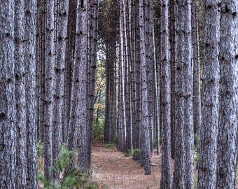 Digital Download Pine tree path