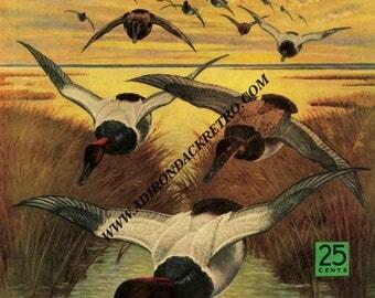Wildlife Fine Art Print - Cabin - Camp - Lodge - Duck Hunting Print - Man Cave Wall Art - Lake House Decor - 1942 Sports Afield Cover Art