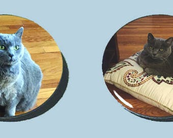 Your Cat (or Dog) ON A BUTTON!!