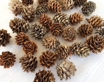 Small Pinecones Real Pinecones Natural Christmas Decor Winter Crafts Rustic Decor Holiday Crafts Fall Decor Fall Crafts Holiday Decor 24