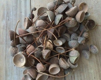 Acorn Caps, Genuine Acorn Caps, Natural Home Decoration,  Acorns Decoration