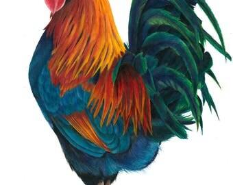 Rooster, Colour pencil Art Print