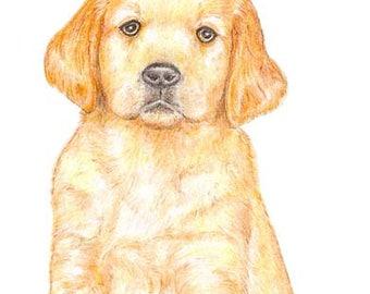 Dexter the Puppy - Birthday Card