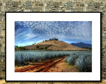 Tequila Landscape Agaves, Tequila Jalisco, Agaves, Mexico                        Instant Dowload,Instant Print, Instant Posters, Wall Decor
