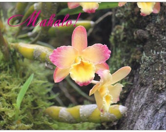 """Orchid  """"Mahalo"""" Thank You Note Cards with """"Mahalo"""" 10 Pack (blank inside w/border) with matching envelope"""