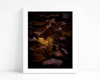 Fall Leaves Photography 8x10 - Printable Photography - Fall Printable - Autumn Photography - Fall Leaves Print - Fall Decor - Autumn Leaves