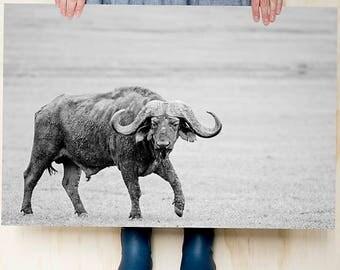 Wall art. Buffalo. Adventure. Wanderlust. Large photo print. Home decoration. Black and White photography